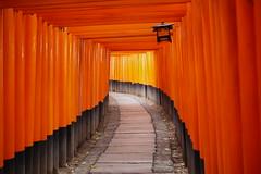 Torii Gates at Fushimi Inari Kyoto