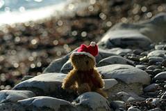 Merry Christmas from Meadfoot Beach (rosiespoonerphotos) Tags: xmas uk sea england ted seascape cute beach water photography coast nikon flickr teddy explore devon torquay coastpath torbay meadfoot meadfootbeach