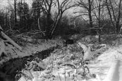 Winter creek 3 (hpulley) Tags: winter blackandwhite film waterloo expired ilforddelta400 canonftbn ilfotecddx ilfostop ilfordrapidfixer yellow8filter ilfotol canonfd35mmf2sscii
