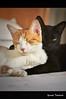 Hug me (Yuricka Takahashi) Tags: brazil brasil cat minas gerais gatos mg gato felino takahashi horizonte bh belo d90 yuricka