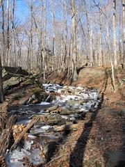 IMG_6123 (Ellen Bulger) Tags: winter ice nature woods connecticut woodbridge wepawaugriver
