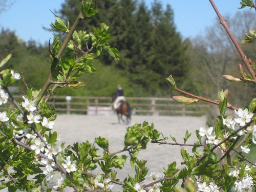 Blossom and distant rider