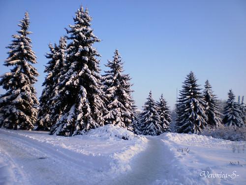 Зима в нашем городе 5303796549_0845108a73