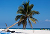 Wish You All A Warm And Sunshiny New Year (DolliaSH) Tags: trip travel blue sea summer vacation sky sun white holiday seascape hot tree tourism beach latinamerica méxico strand swimming swim canon relax mexico fun boats boat sand warm paradise tour place maya diving playa visit location tourist palm snorkeling yucatán journey tropical mexique destination traveling visiting rivieramaya plage 70200 spiaggia touring mexiko marcaribe caribe quintanaroo ranta caribbeansea noun turquoisewaters 50d meksiko peninsuladeyucatan canoneos50d mexikó dollia dollias sheombar plyazh dolliash elparaisobeach
