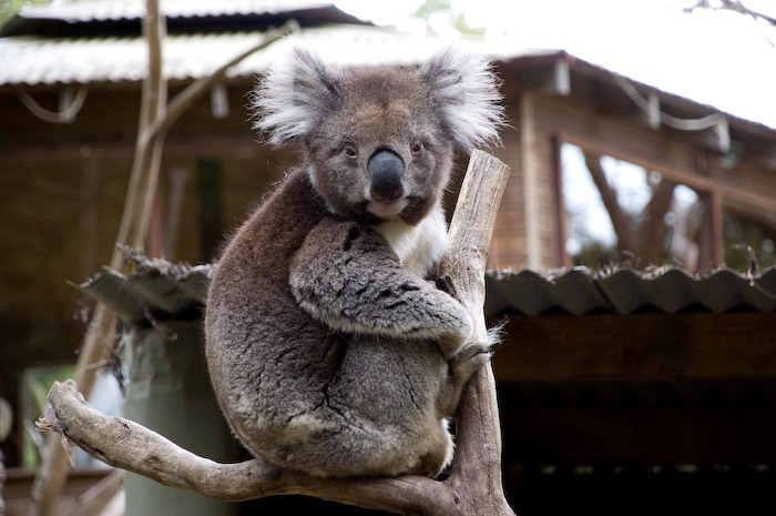 Australia (210 of 332)