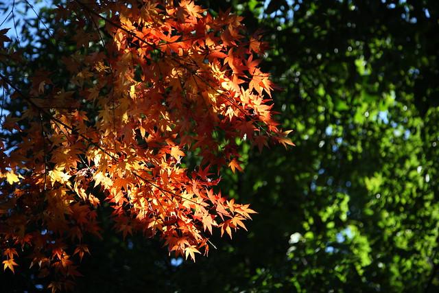 葉色のコントラスト
