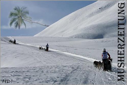 Dietz_alpen_trail_2009_palm_tree