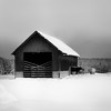 B&W conversion and tonality for this image: (c e d e r) Tags: winter blackandwhite bw snow barn cows snowscape tonality