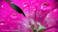 Raindrops  (julember2000 | JulinDBernal) Tags: naturaleza lluvia colombia gotas fotos raindrops invierno gotasdelluvia julember2000 juliandbernal raindropsphotos
