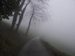 A volte trovo perch cerco profondit ad oltranza (A. Casiraghy) (Alberto Cameroni) Tags: nebbia aforisma casiraghy albertocasiraghy