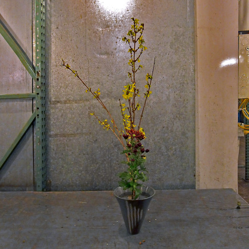 Shoka arrangement: forsythia branches and mums