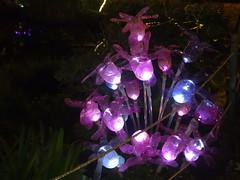 080120111267 (POITA1003) Tags: luci natale atmosfera salerno luminarie magia incanto festenatalizie ilgiardinoincantato