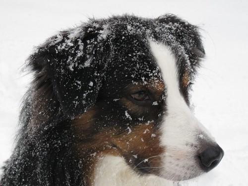 SnowyJasper