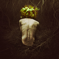 with fallen flowers (brookeshaden) Tags: flower forest vines woods ground growth ribs twig lonely spine brookeshaden