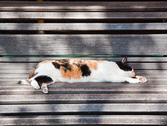 lazy cat (Paolo Margari) Tags: sleeping orange pet white amsterdam animals cat canon bench photography photo chat foto photographer sleep photographers lazy fotografia sunrays gatto canoneos sonno 2009 animali fotografo micio fotografi panchina italianphotographers animalidomestici paolomargari fotografiitaliani