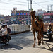 Jodhpur : Modes of Transportation