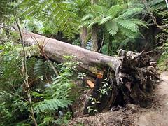 Abel Tasman, NZ (C) 2010