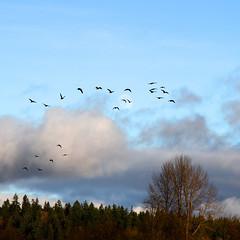 Pasan huyendo los pjaros.  El viento.  El viento. (1crzqbn) Tags: trees sky sunlight moon 3 color nature birds clouds square landscape flora poem 7d 23 canadagee
