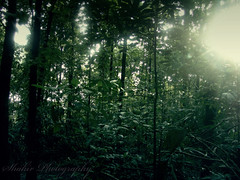Close to nature (Shahir Aboobacker) Tags: light india green forest photoshop kerala athirappilly thickforest