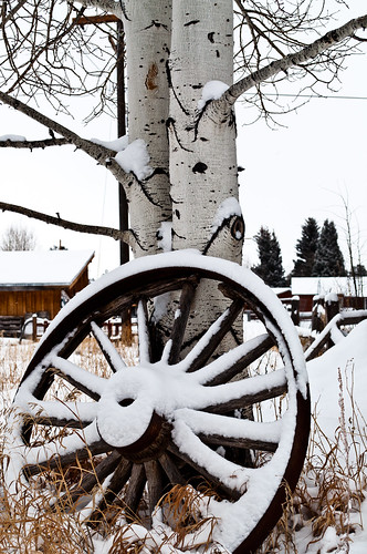a picture of an old wagon wheel covered in snow leaning on a skinny tree with white bark, log cabins can be seen in the background