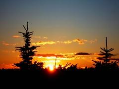 Happy Sunset Wednesday - Feliz Quarta Sunset! (peggyhr) Tags: blue trees friends sunset sky orange sun white canada black yellow clouds niceshot edmonton silhouettes alberta harmony spruce topseven peggyhr flickrbronzeaward bestsun heartawards thebestshot 100commentgroup angelawards flickraward lovelyflickr flickrsgottalent mygearandme lomejordemisamigos ringexcellence level1photographyforrecreation quartasunsetsunsetwednesday thebestshots p1290113ap