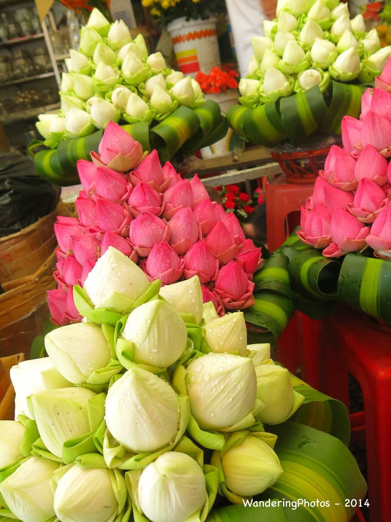 The Worlds Best Photos Of Lotusflower And Phnompenh Flickr Hive Mind