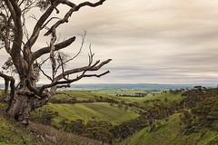 Clare Valley-2 (Rogier van de Laar) Tags: clare valley spring gully south australia landscape x100s fujifilm
