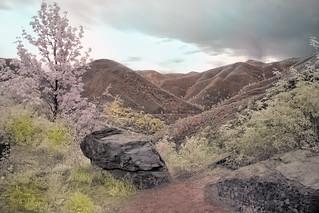california landscape ir faux color 6