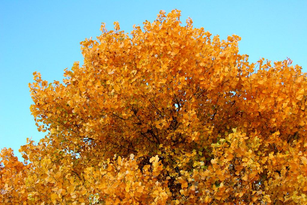 Mesilla Autumn