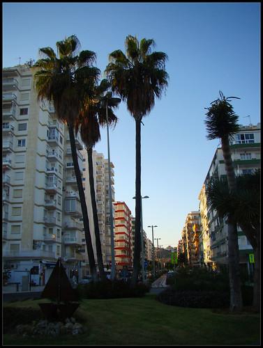 Palmeras Torre del Mar