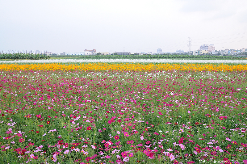 大寮花海 (3).jpg