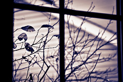 (tw.marko) Tags: winter blackandwhite bw nature leaves minnesota canon blackwhite dof bokeh 5d tone warminside coldoutside splittoning natureycrap