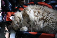 Jasper sunning in the duffel bag