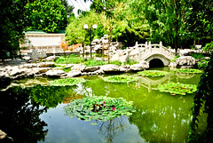 Beijing Language and Culture University (Choollus) Tags: china bridge lake beautiful garden lago peace chinese beijing harmony  chinesegarden  cina giardino cinese haidian wudaokou pechino beijinglanguageandcultureuniversity  yuyandaxue