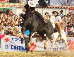 El picazo (Eduardo Amorim) Tags: horses horse southamerica caballo uruguay cheval caballos cavalos prado montevideo pferde cavalli cavallo cavalo gauchos pferd hest hevonen chevaux gaucho  amricadosul montevidu hst uruguai gacho  amriquedusud  gachos  sudamrica suramrica amricadelsur  sdamerika jineteada   americadelsud gineteada  americameridionale semanacriolla semanacriolladelprado eduardoamorim iayayam yamaiay semanacriolladelprado2010