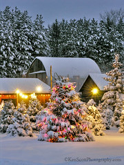 Christmas Tree Farm ... open! (Ken Scott) Tags: winter usa snow fall twilight december michigan barns 2006 christmaslights leelanau fhdr valentinetreefarm