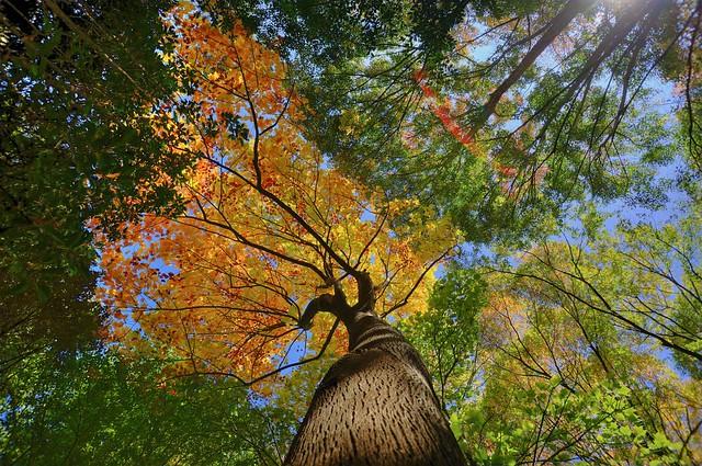 武蔵野公園でHDR #2