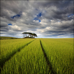 Uras Knaps (angus clyne) Tags: road trees summer green field grass canon fence evening coast scotland warm track branch aberdeenshire angle flat very angus path north wide scottish east bark crop 5d mound stalk beech clyne flaten catterline barly vertorama urasknaps