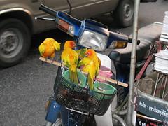 Birds On Motorbike (rodeochiangmai) Tags: birds honda thailand motorbike transportation chiangmaithailand totallythailand