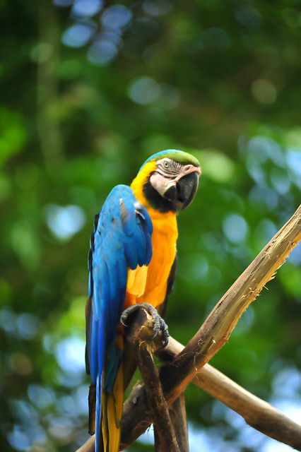 Zoo Taiping 1
