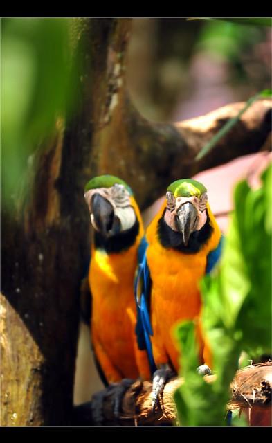Zoo Taiping 21