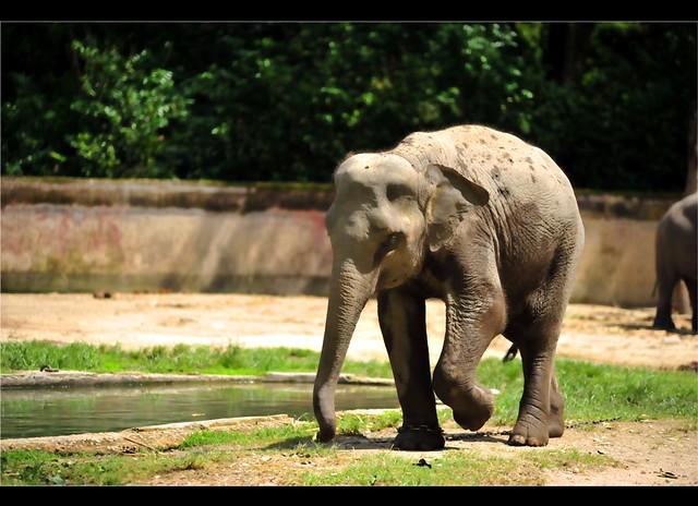Zoo Taiping 57