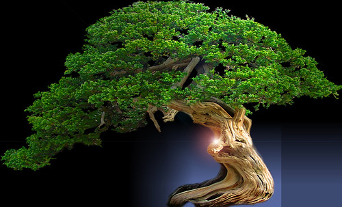 """Bonsai042 • <a style=""""font-size:0.8em;"""" href=""""http://www.flickr.com/photos/30735181@N00/5261338479/"""" target=""""_blank"""">View on Flickr</a>"""