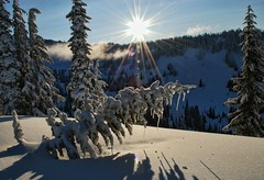 Wish Upon a Star (Deby Dixon) Tags: morning sunlight snow tourism sunrise photography washington nationalpark travels nikon paradise shadows valley mtrainier magical icicles deby allrightsreserved freshsnow mtrainiernationalpark treesmountain debydixon debydixonphotography