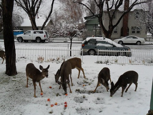 feed deer kate robertson susanville