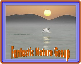 Fantastic Nature