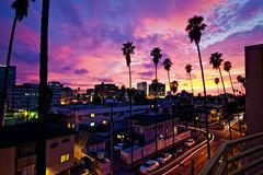 Palm Trees Under a Violet Sky (Mr Gold) Tags: sunset sky colors losangeles purple balcony violet palmtrees koreatown mygearandmepremium mygearandmebronze mygearandmesilver
