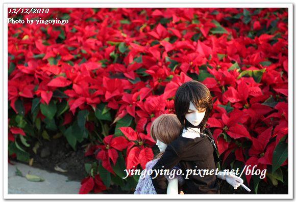 2010花博_圓山公園區 精緻花卉區 991212_I5881