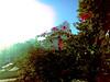 Bushes (Vitor Chiarello) Tags: sun sol gimp celular zn5