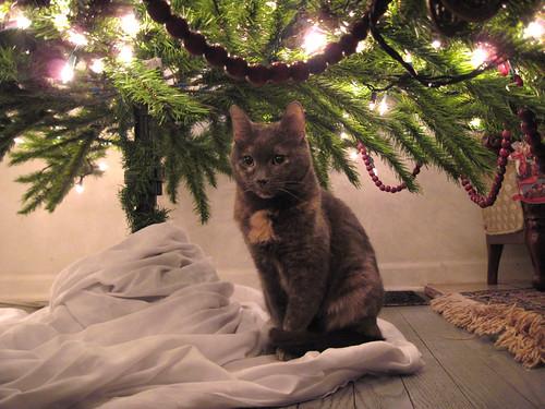 Penny under tree